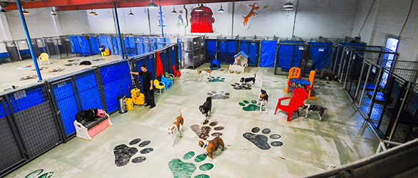 doggy day care salt lake city
