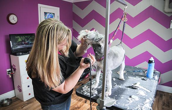 dog grooming salt lake city